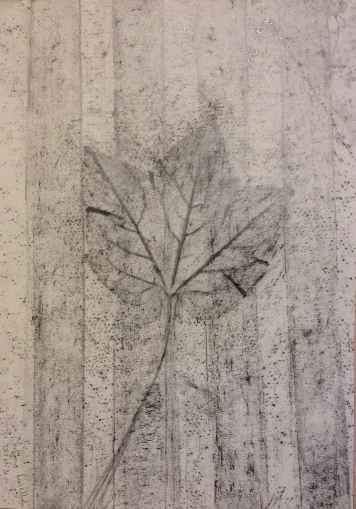 Autumn leaf (2016) graphite on paper