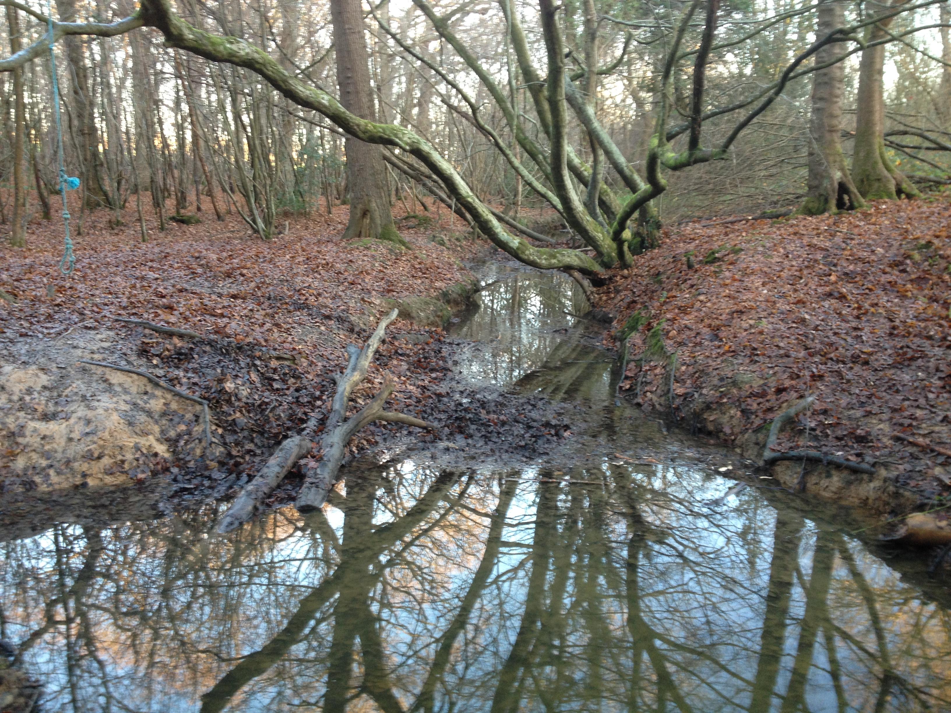 Reflections RSPB Blean Woods (2017) photo