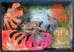 Sea-life (2017) assemblage box: mixed media